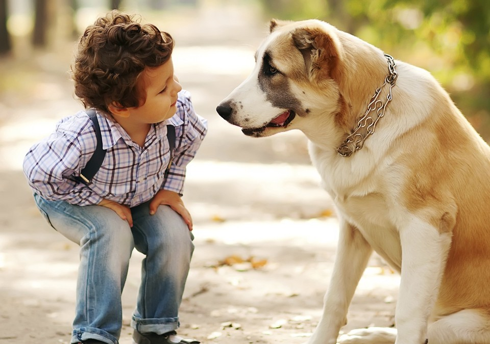 little cute boy playing with his dog